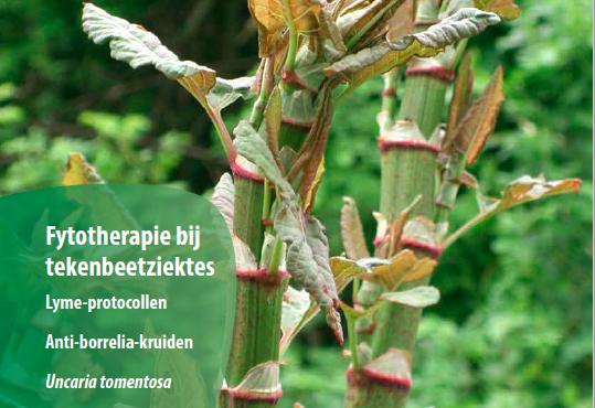 NTvF Nederlands Tijdschrift voor Fytotherapie kruiden voor Lyme