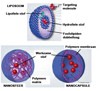 FIGUUR 1 | Voorbeelden van liposoom en polymere nanopartikels