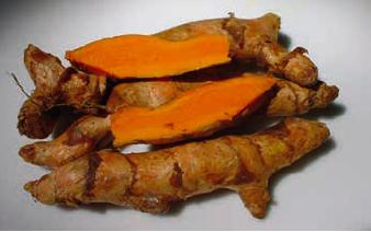 AFBEELDING | Curcuma sp, geelwortel