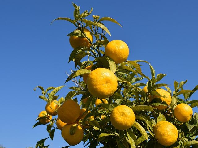 synefrine in citrus aurantium