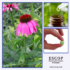 werking echinacea
